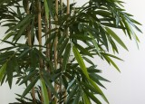 Seidenpflanzen