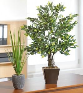 Pflanzen & mehr