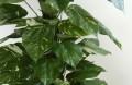Seidenpflanze  Scindapsus Moosstock Höhe 150 cm in dekorativem Kunststoff-Terracotta-Blumentopf