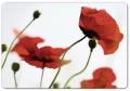EMSA CLASSIC Brettchen Corn poppies