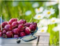 EMSA CLASSIC Tablett 40x31 cm Cherries